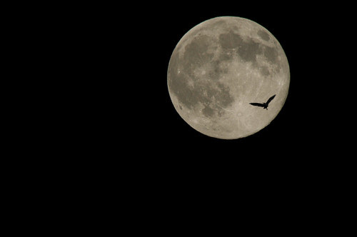 月見鳥 Birds Flying to the Moon
