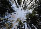 El cambio climático provocará que los matorrales devoren el bosque mediterráneo