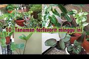 10 tanaman ter populer