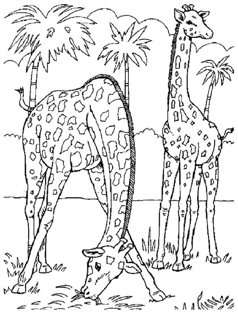 Dessin Coloriage girafe
