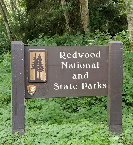 Redwoods Road Trip – An Introduction