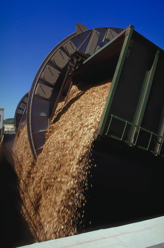 Wood Pellet Exports Supply Europe's Inexhaustible Need