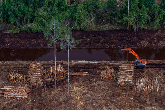 APRIL violates sustainability policy by clearing peat forest after Jan cut-off