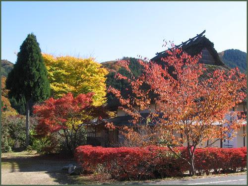 KO04 all colors of autumn OK