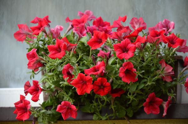 Kwiaty Na Naszym Tarasie Ckcs
