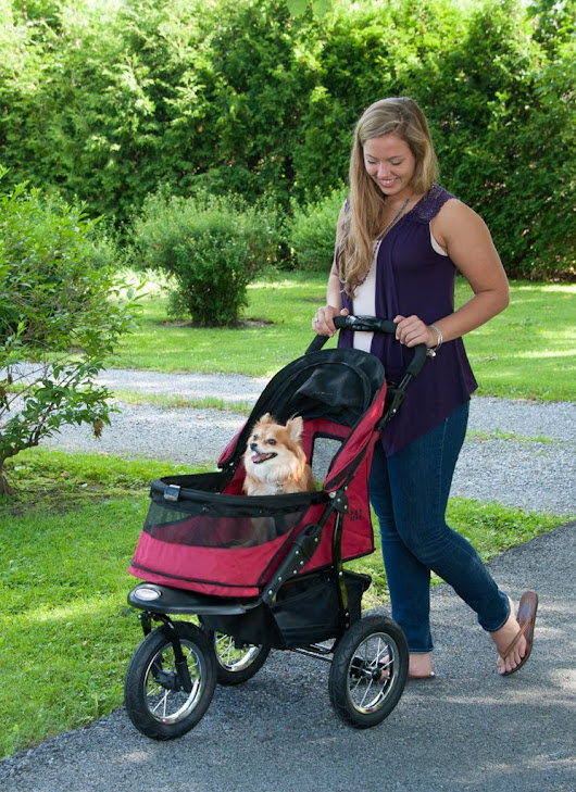 Pet Gear Jogger Stroller Review - Caring For a Senior Dog