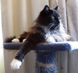 cooling-arm-cat