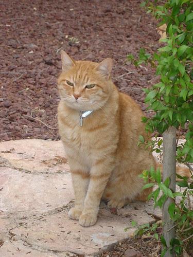 Ms. Neighborcat