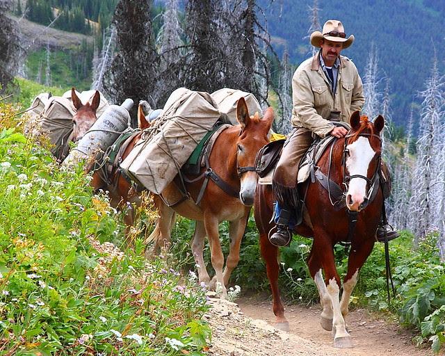 IMG_3419 Mule Team Supplying Granite Park Chalet