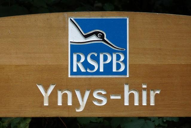 P1090740 - RSPB Ynys-hir