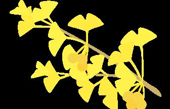 イチョウの検索結果 イラスト緑花ryokka