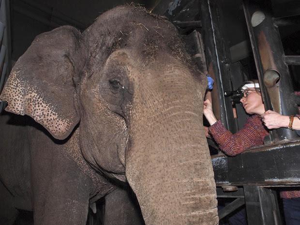 A veterinária Anne-Marie Verbruggen foi a responsável por colocar a lente no animal. (Foto: Zoológico Artis / HO / AP Photo)