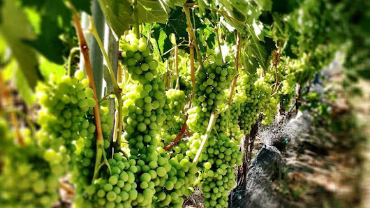 Mid-Week Special Wine Tours in Santa Barbara & Santa Ynez Valley