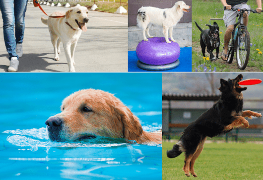 How Much Exercise Does a Dog Need Every Day? | DevotedtoDOG.com