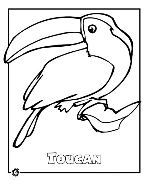 rainforest animals coloring pages   national bird