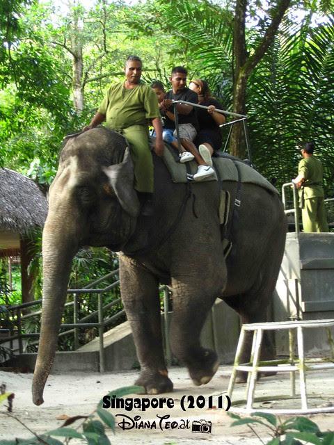 Day 3 Singapore - Zoo Singapore 21