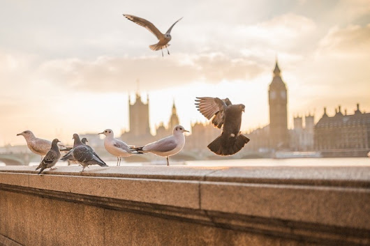 The Best of Responsible Travel in London: A Guide. - Soul Travel Blog | Responsible Travel Inspiration