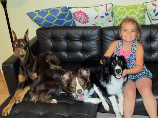 4th of July Safety, Fireworks and Fun in the Pool: News from Orlando Dog Manners and More