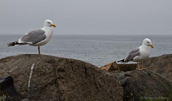 sea gull conversation