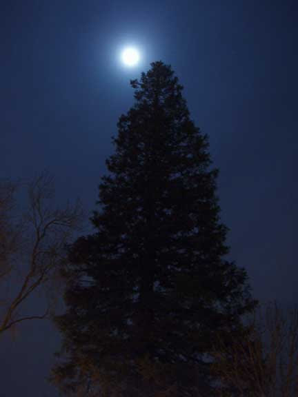 Misty moon and tree