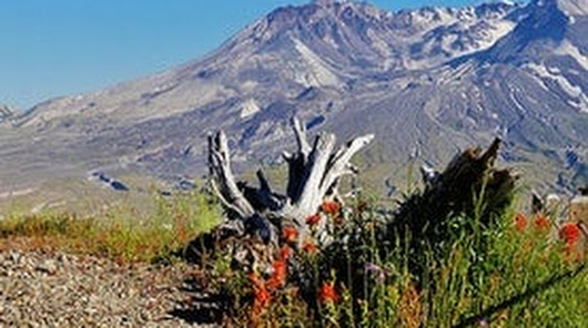 The Absolutely Definitive Mount St. Helens Collection
