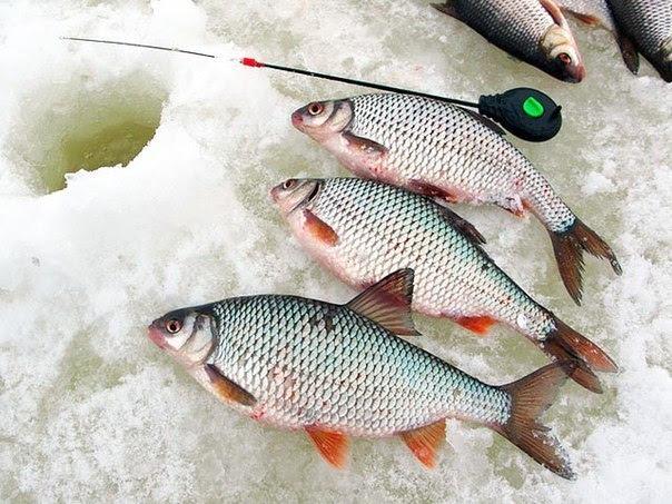 Ловля плотвы в февреле, где ловить плотву, как ловить плотву, прикормка для ловли плотвы ловля плотвы зимой, ловля плотвы в глухозимье, насадки для ловли плотвы,  рыбалка на плотву, зимняя рыбалка плотвы, рыбалка по льду