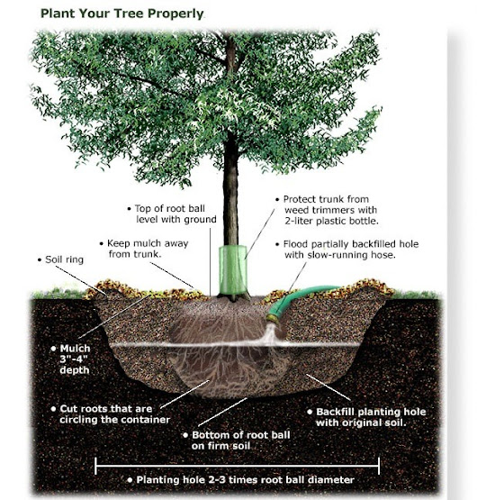 Complete Tree Care and Removal - Arboriculture Services - When planting a tree in your house there are few...