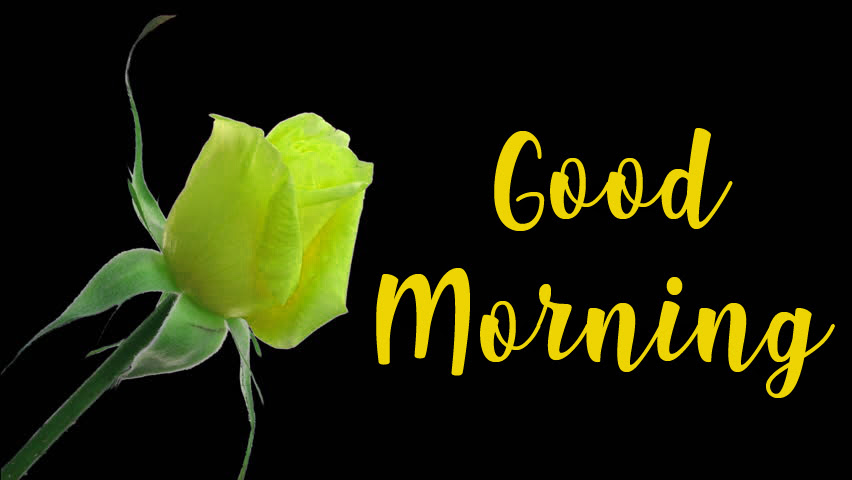 Good Morning Status For Family And Friends Quotes Message