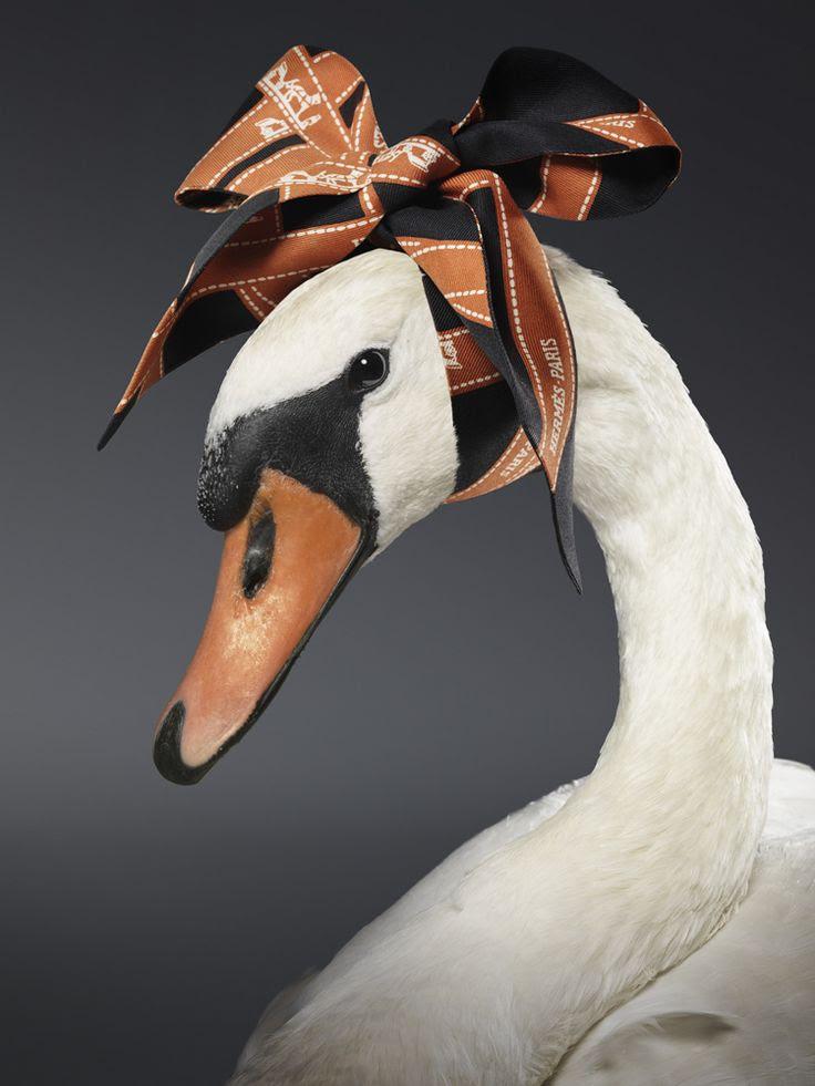 hermes scarf swan