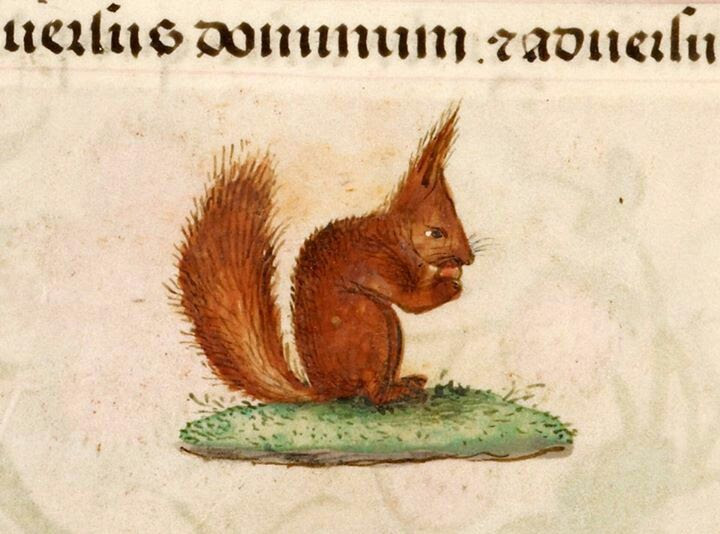 Medieval squirrel!