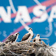 NASA's $7 billion exploration-class rocket to ferry humans to Mars - The Economic Times