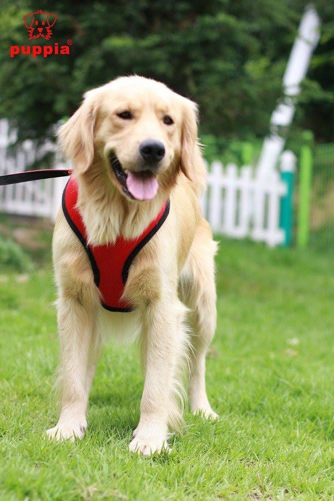 Best Dog Walkers Jersey City
