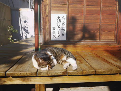 Sleeping on Sunlit Engawa by Takuya In The Sky