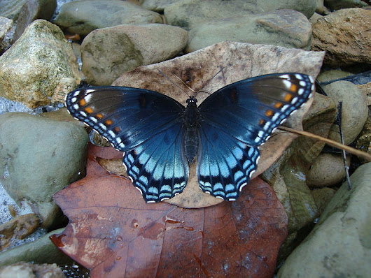 The Butterfly Effect and Everything You Ever Wanted to know About Butterflies