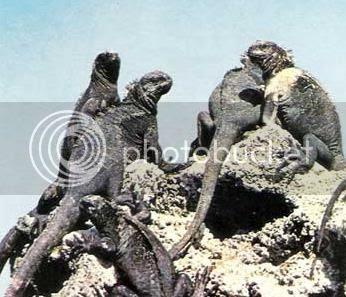 photo iguanasunbath_zps64031ed8.jpg