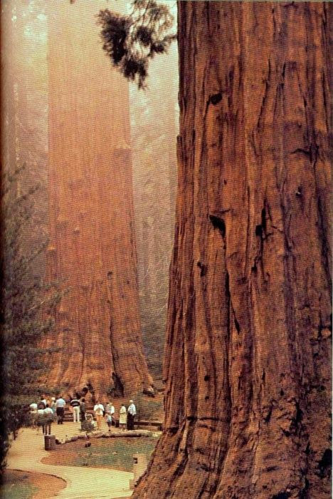 California's Sequoia national park.