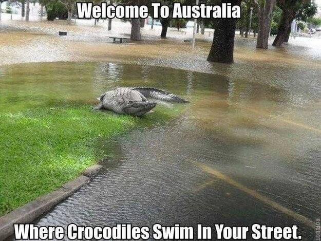 animales_australia_14