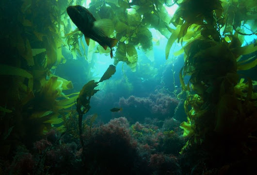 The value of underwater algal forest | Going Green | The Earth Times