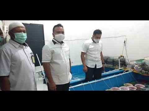 Video Penggerebekan Baby Lobster Ilegal Oleh Polda Jambi
