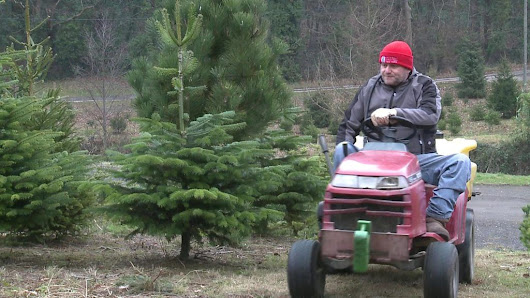 Branching out to grow Christmas trees, despite my accident - BBC News