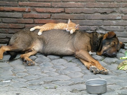 let sleeping kittens...