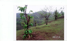 कमी होत असलेली वनसंपदा