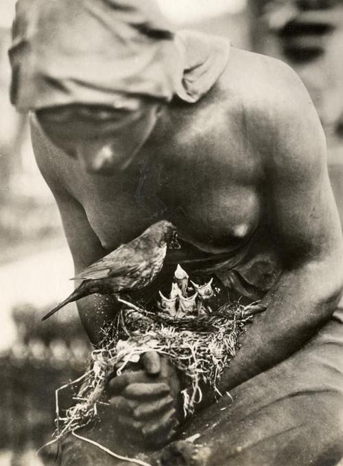 Blackbird's nest in the folded hands of a statue in a graveyard in Berlin, Germany, 1932.