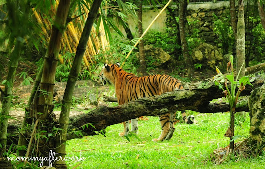 A Day in Cebu Safari and Adventure Park | Mommy After Work