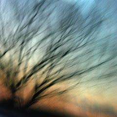 Howling wind matting down my world by lepiaf.geo