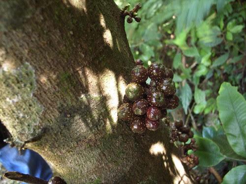 有誰知道這是果實嗎?