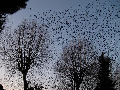 Birds in trees 2/2