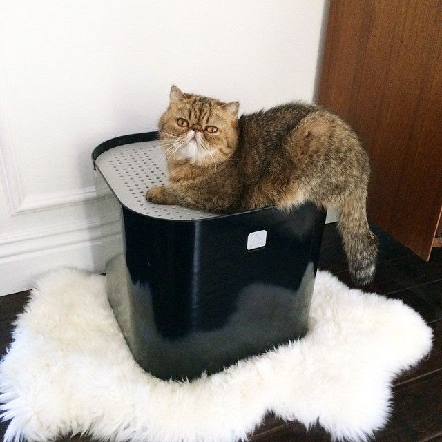 Le Fashion Blog LA Apartment Instagram Stylish Fashionabe Litter Box Modkat Exotic Shorthair Cat Sheepskin Rug photo Le-Fashion-Blog-LA-Apartment-Instagram-Stylish-Fashionabe-Litter-Box-Modkat-Exotic-Shorthair-Cat-Sheepskin-Rug.jpg