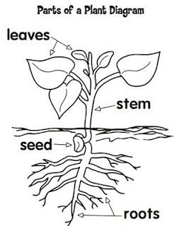 Plant Diagram Easy