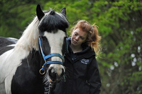 Animal charity fear witchcraft is behind horse attack | Deadline News